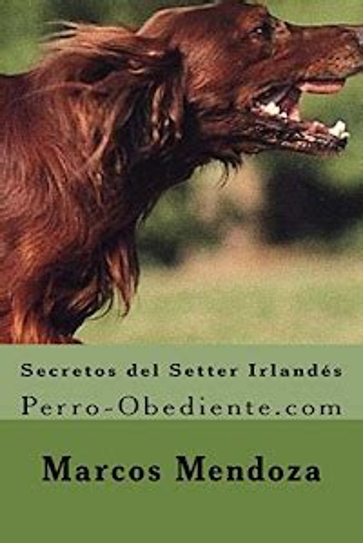 Secretos del Setter Irlandes Perro Obediente com
